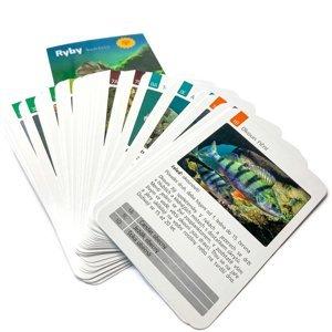 Kvarteto - hra pro rybáře s kartami ryb