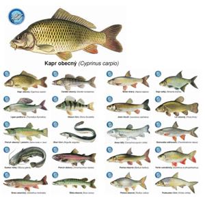 Črs sada magnetek s rybami 20 ks
