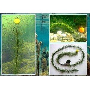 Katran šňůrka Mimicker Hook Link Algae 10m, 25lb