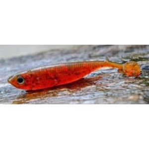 5ks - Kopyto Sharpfishes Glossy Killer 7,5cm 3gr Motor Oil